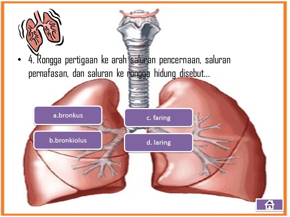 4. Rongga pertigaan ke arah saluran pencernaan, saluran pernafasan, dan saluran ke rongga hidung disebut...
