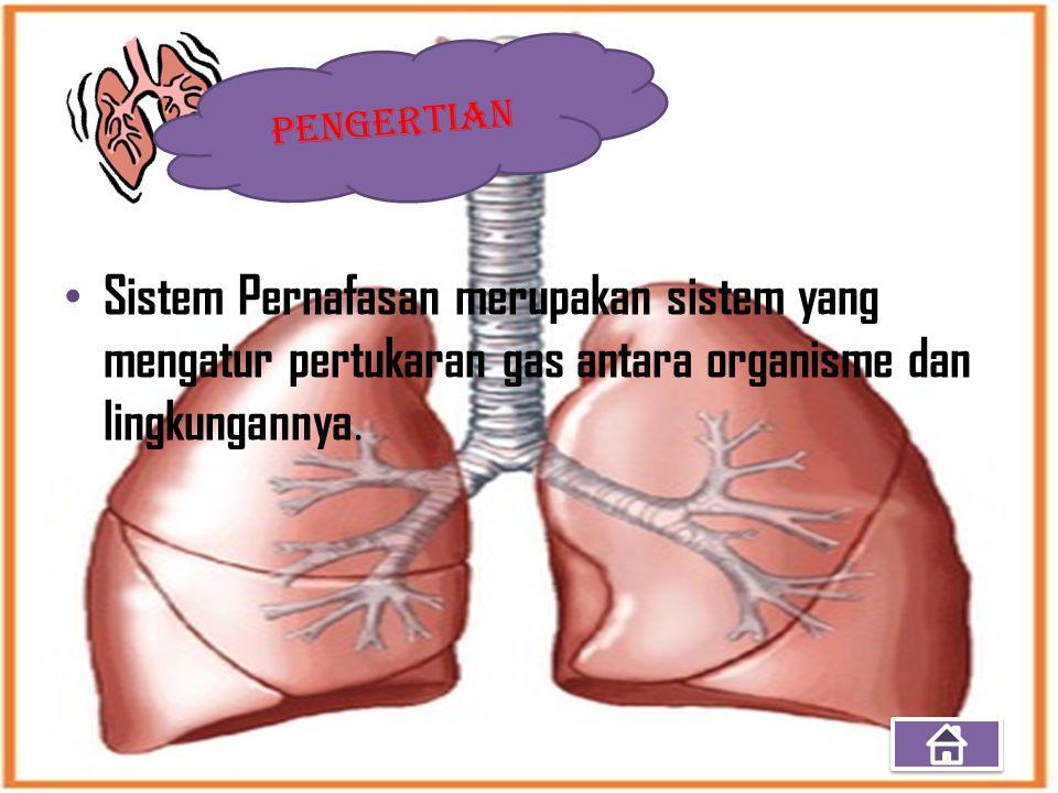 PENGERTIAN Sistem Pernafasan merupakan sistem yang mengatur pertukaran gas antara organisme dan lingkungannya.