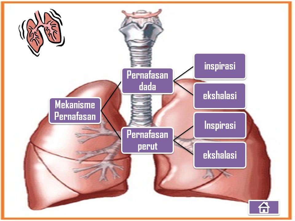 Mekanisme Pernafasan Pernafasan dada inspirasi ekshalasi Pernafasan perut Inspirasi