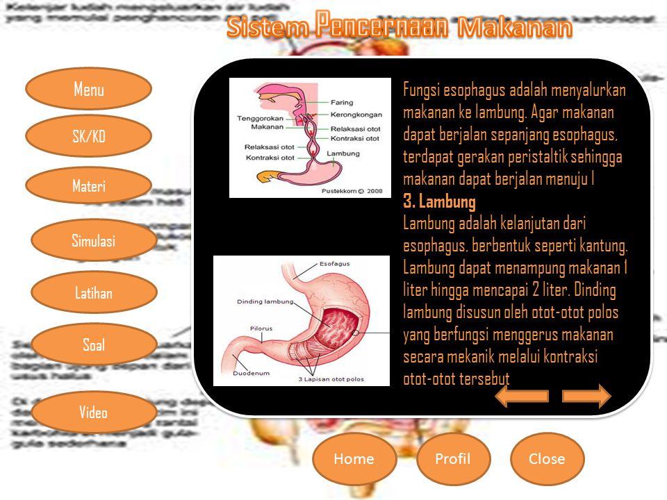 Fungsi esophagus adalah menyalurkan makanan ke lambung