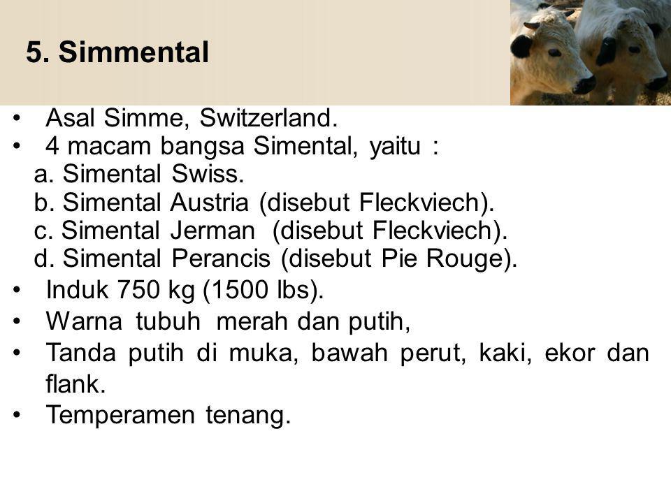 5. Simmental Asal Simme, Switzerland. 4 macam bangsa Simental, yaitu :