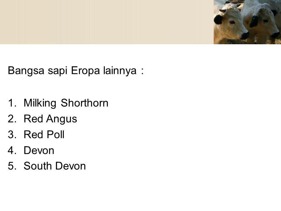 Bangsa sapi Eropa lainnya :