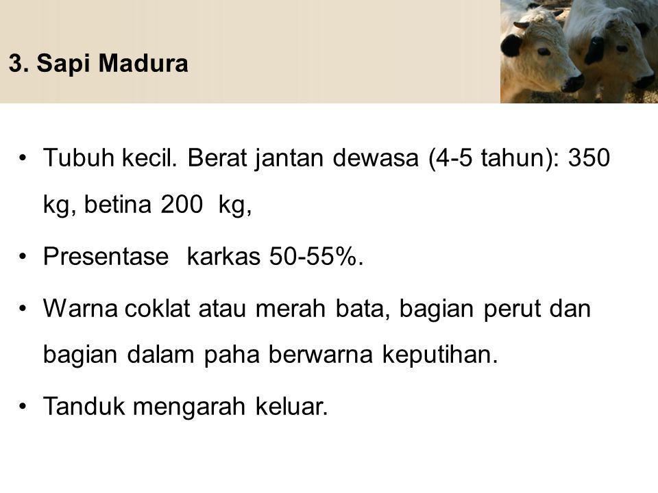 3. Sapi Madura Tubuh kecil. Berat jantan dewasa (4-5 tahun): 350 kg, betina 200 kg, Presentase karkas 50-55%.