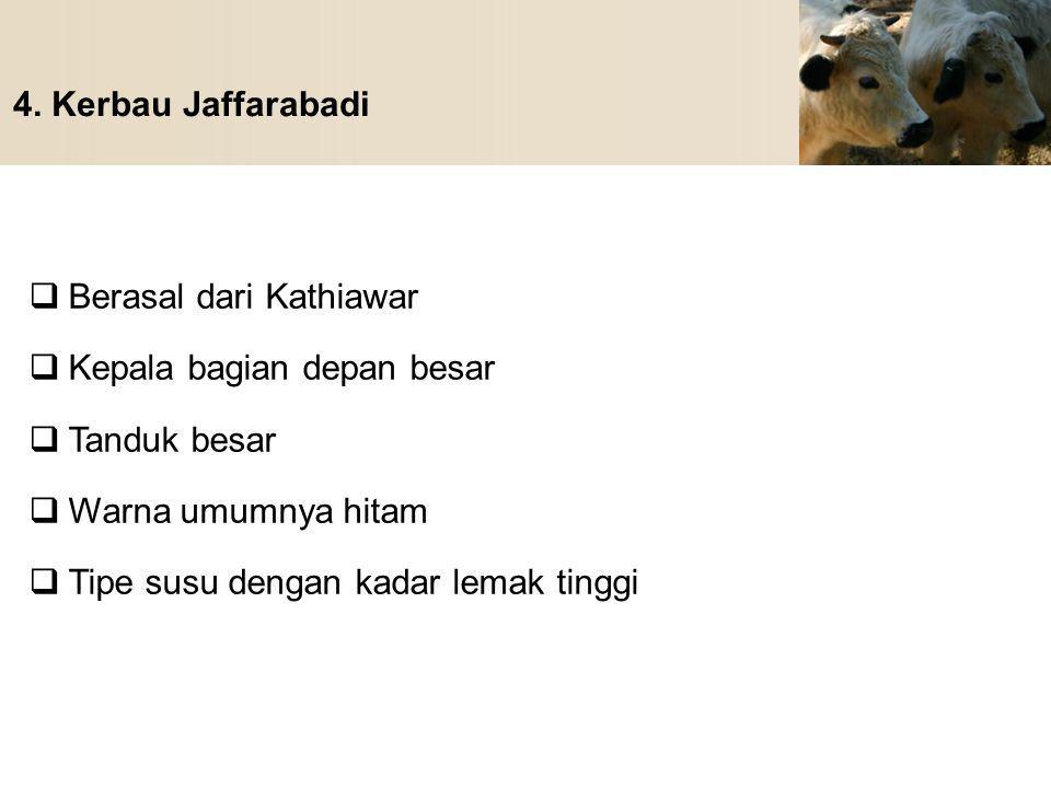 4. Kerbau Jaffarabadi Berasal dari Kathiawar. Kepala bagian depan besar. Tanduk besar. Warna umumnya hitam.
