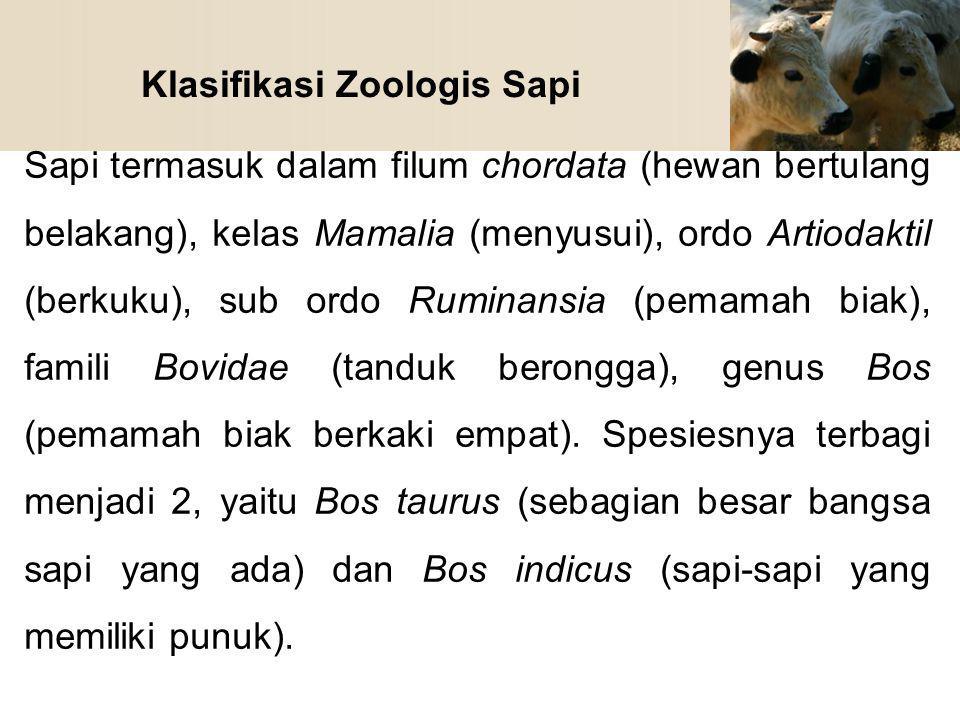 Klasifikasi Zoologis Sapi