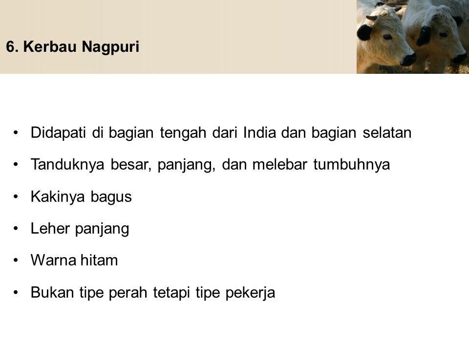 6. Kerbau Nagpuri Didapati di bagian tengah dari India dan bagian selatan. Tanduknya besar, panjang, dan melebar tumbuhnya.