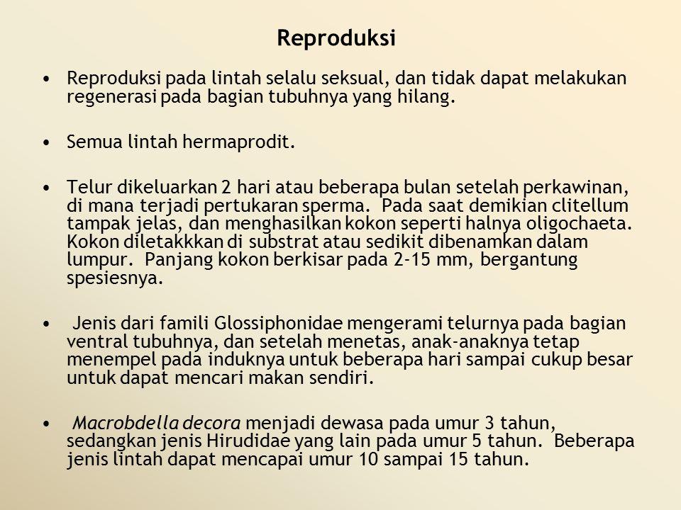 Reproduksi Reproduksi pada lintah selalu seksual, dan tidak dapat melakukan regenerasi pada bagian tubuhnya yang hilang.