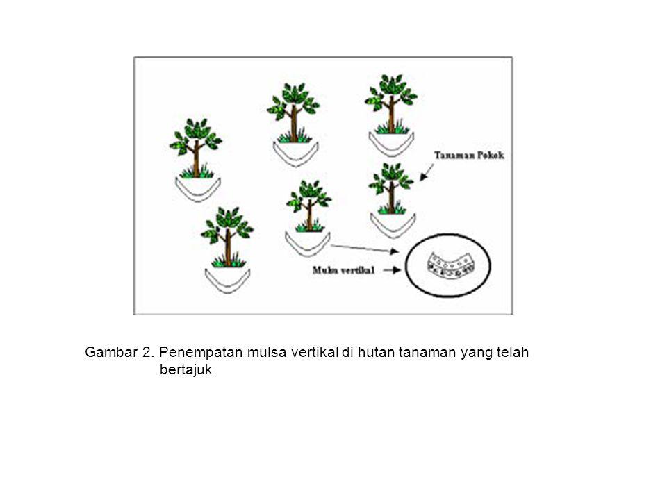 Gambar 2. Penempatan mulsa vertikal di hutan tanaman yang telah