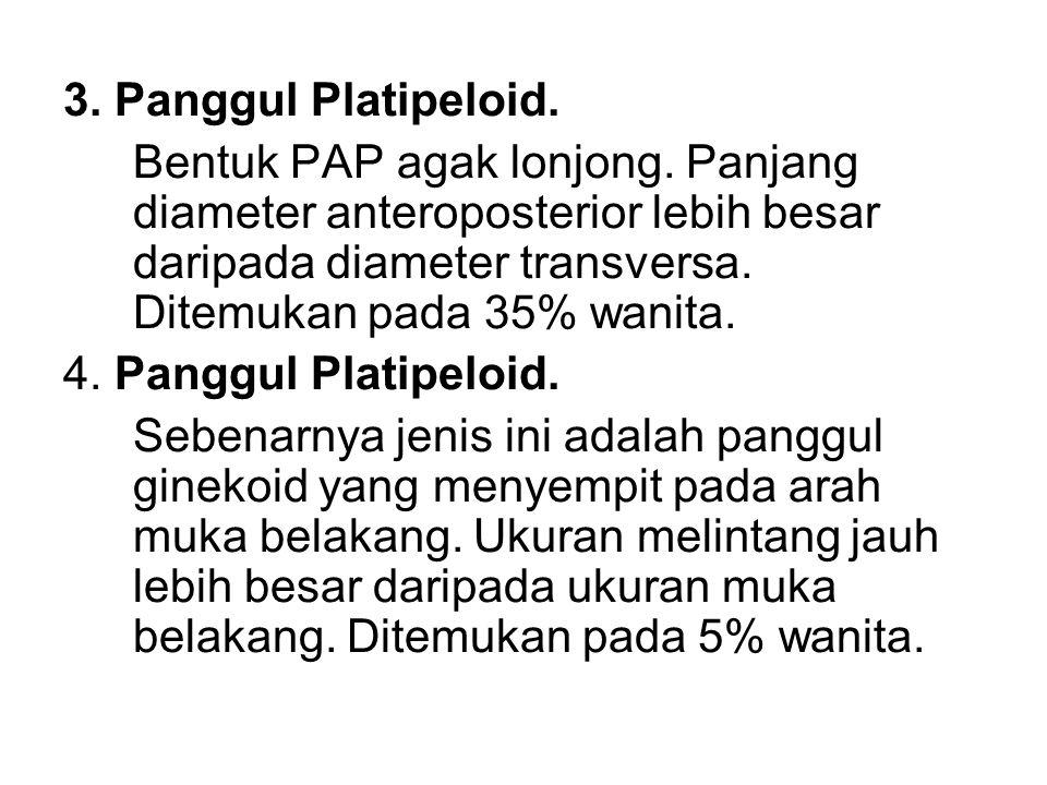 3. Panggul Platipeloid.