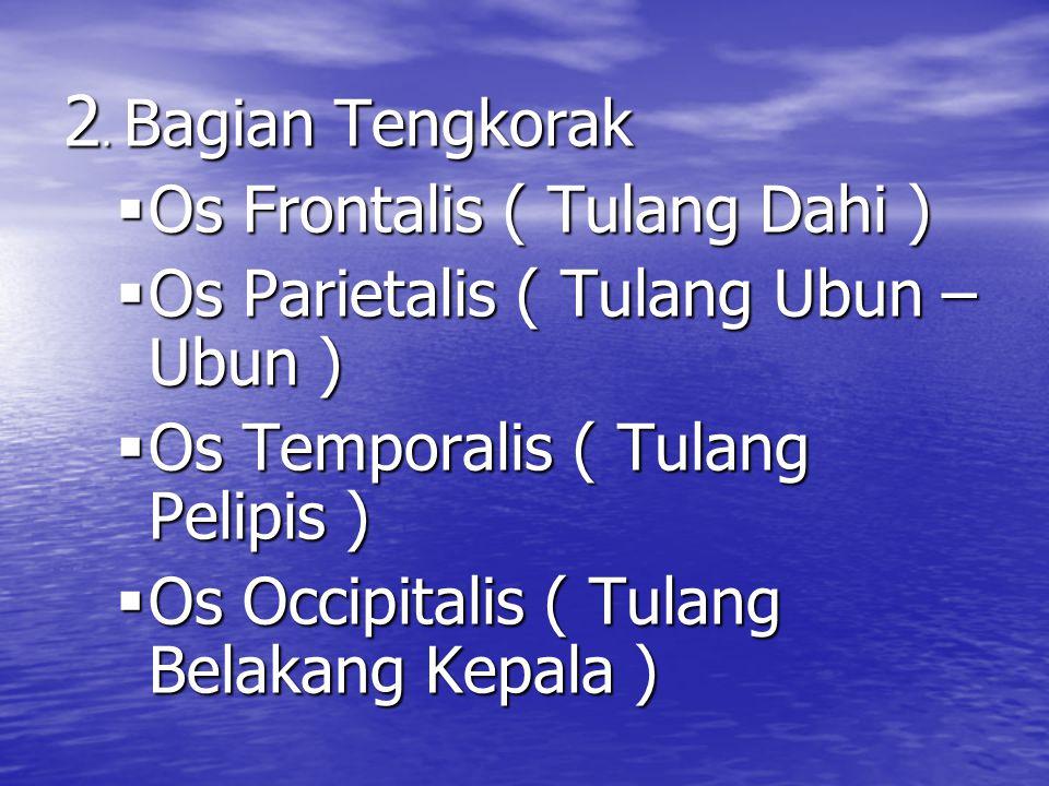 2. Bagian Tengkorak Os Frontalis ( Tulang Dahi )