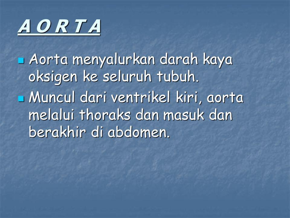 A O R T A Aorta menyalurkan darah kaya oksigen ke seluruh tubuh.