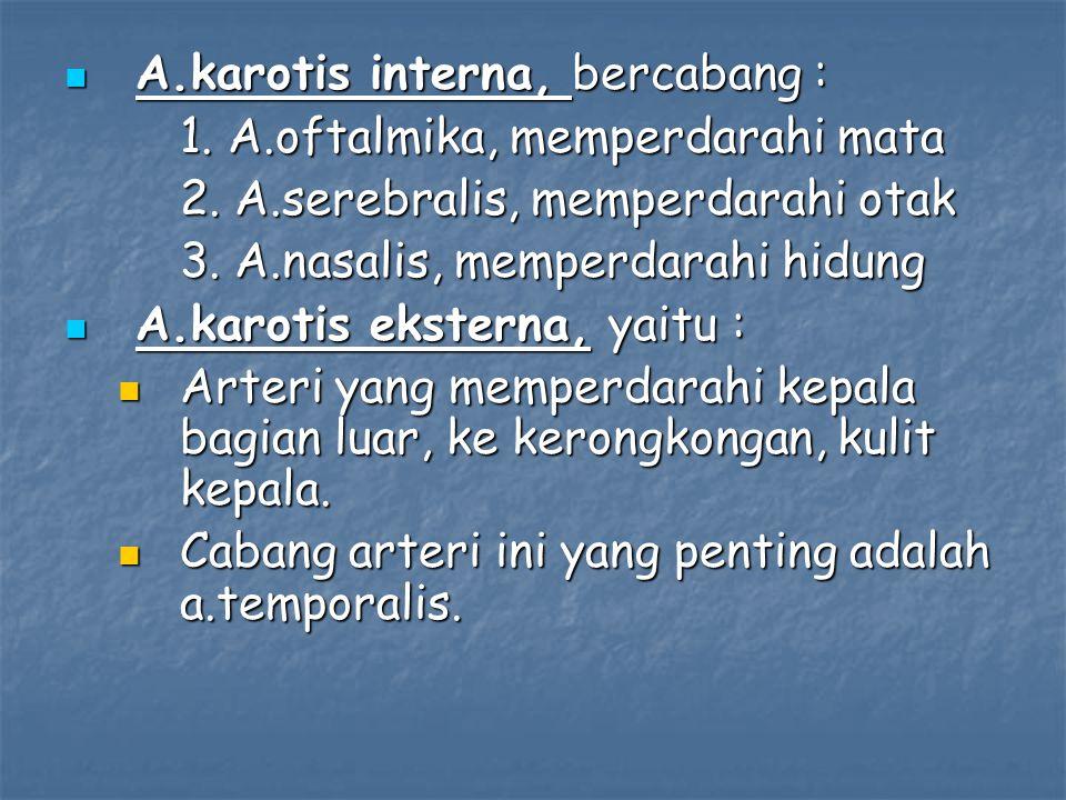 A.karotis interna, bercabang :