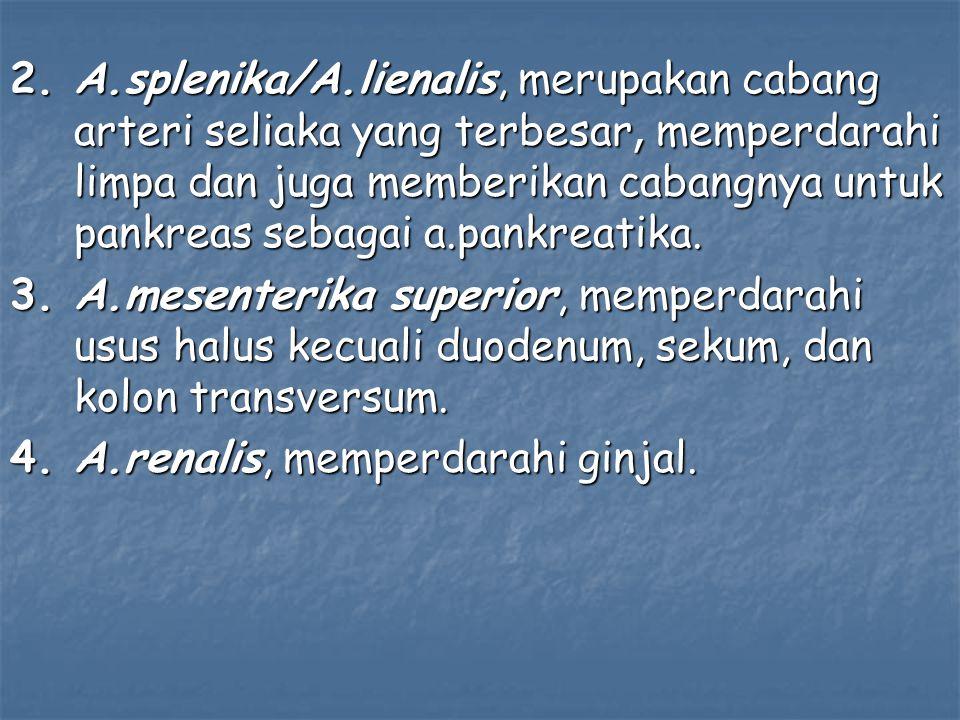 2. A.splenika/A.lienalis, merupakan cabang arteri seliaka yang terbesar, memperdarahi limpa dan juga memberikan cabangnya untuk pankreas sebagai a.pankreatika.