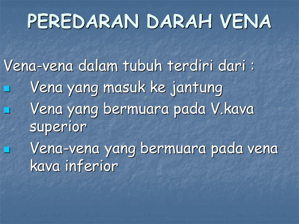 PEREDARAN DARAH VENA Vena-vena dalam tubuh terdiri dari :