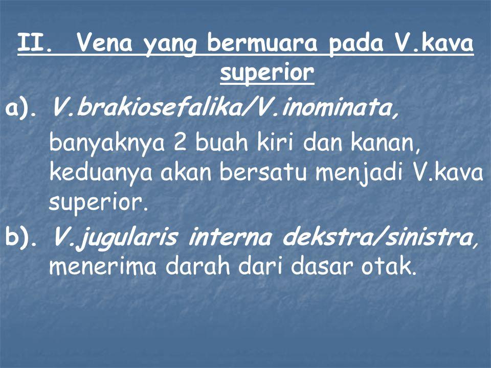 II. Vena yang bermuara pada V.kava superior