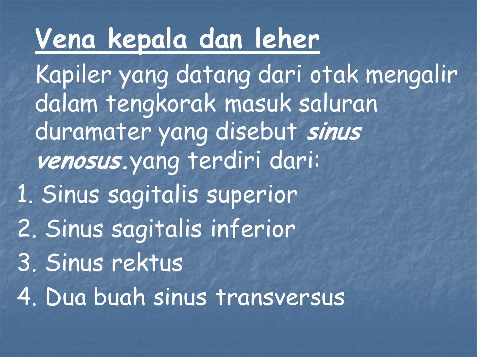 1. Sinus sagitalis superior 2. Sinus sagitalis inferior