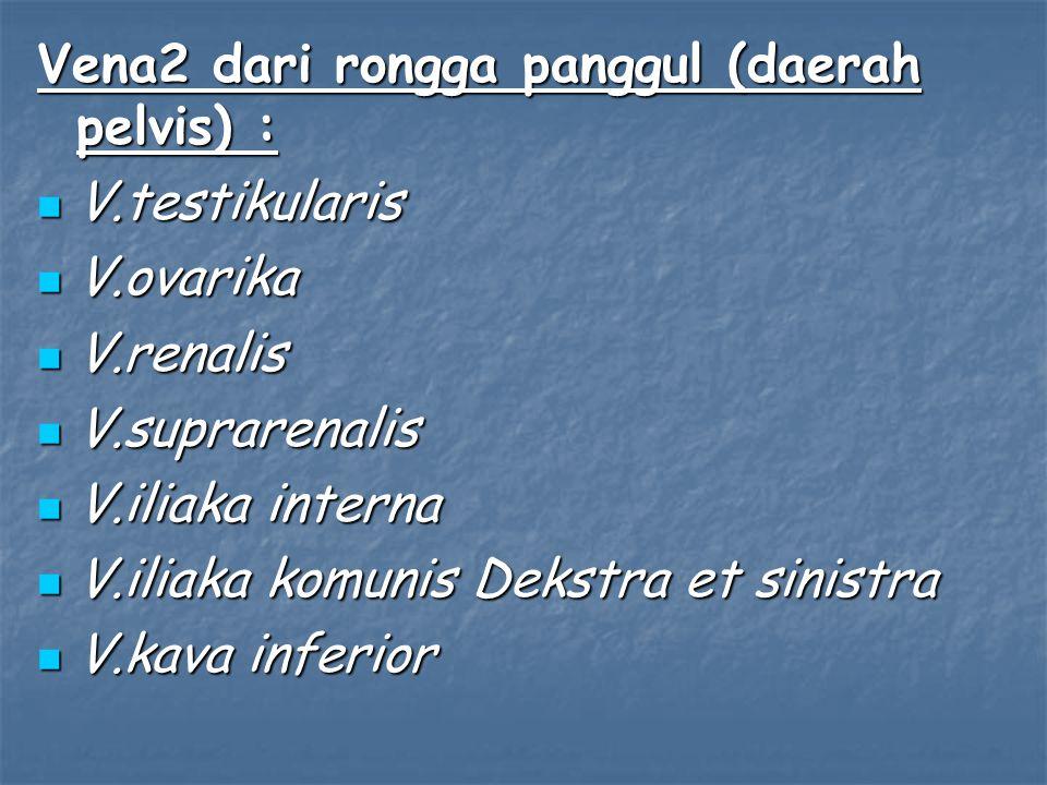 Vena2 dari rongga panggul (daerah pelvis) :