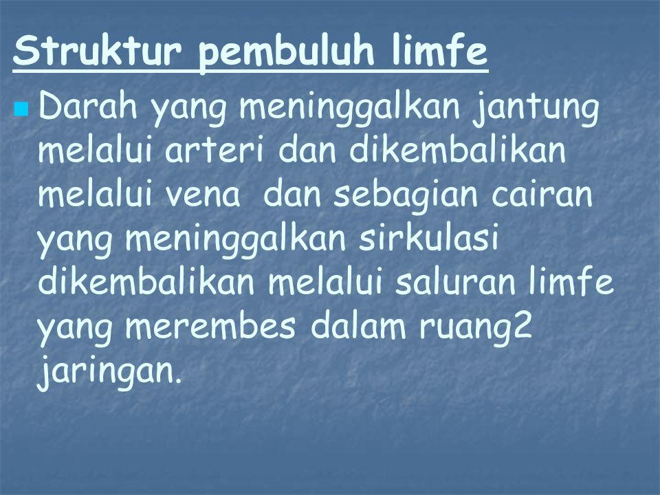 Struktur pembuluh limfe