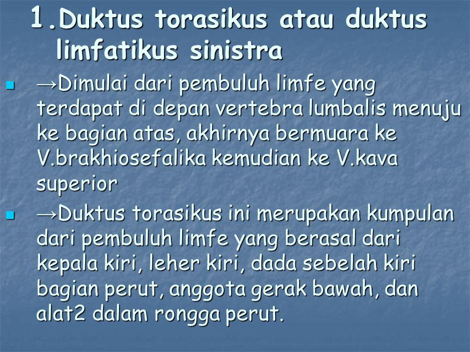 Duktus torasikus atau duktus limfatikus sinistra
