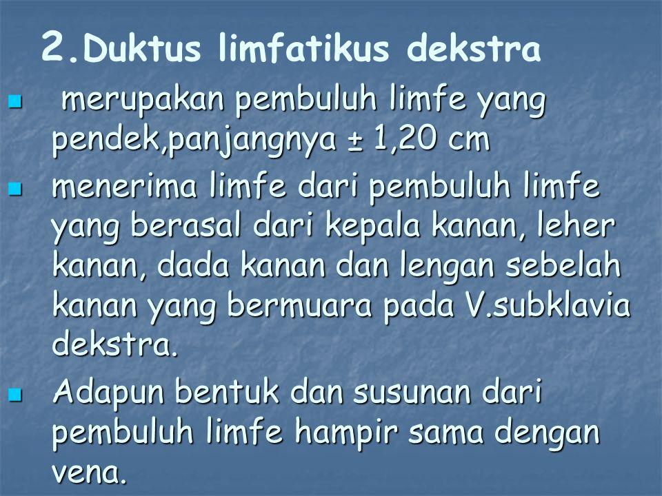 Duktus limfatikus dekstra