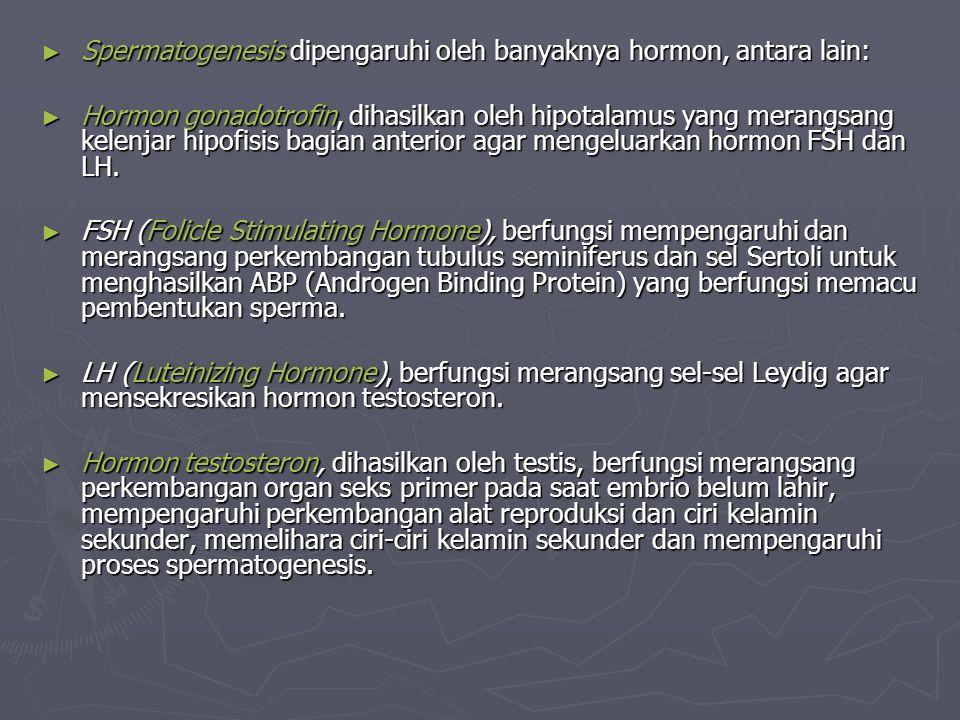 Spermatogenesis dipengaruhi oleh banyaknya hormon, antara lain: