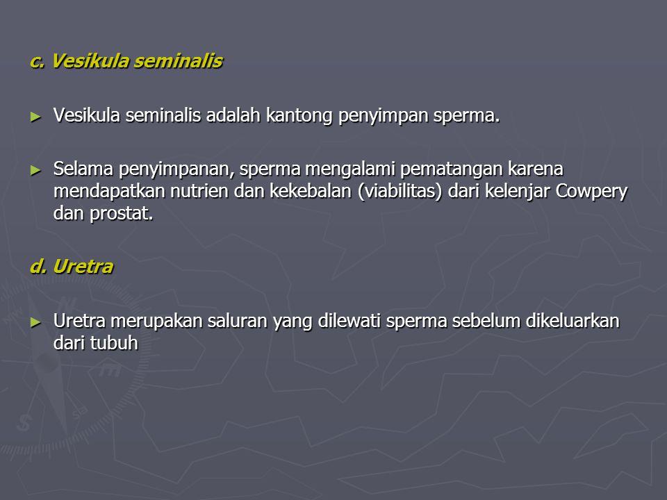 c. Vesikula seminalis Vesikula seminalis adalah kantong penyimpan sperma.