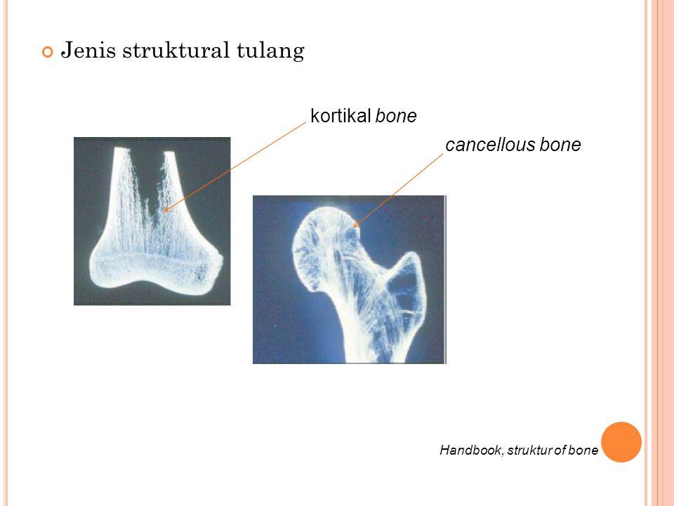 Jenis struktural tulang kortikal bone