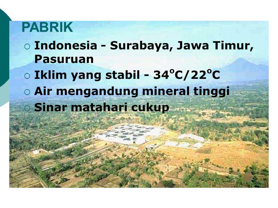 PABRIK Indonesia - Surabaya, Jawa Timur, Pasuruan