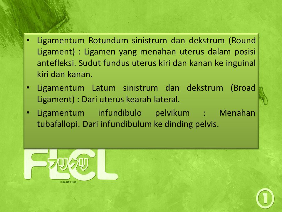Ligamentum Rotundum sinistrum dan dekstrum (Round Ligament) : Ligamen yang menahan uterus dalam posisi antefleksi. Sudut fundus uterus kiri dan kanan ke inguinal kiri dan kanan.