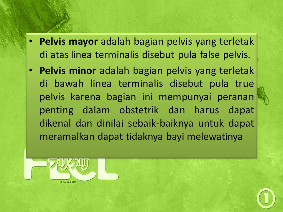 Pelvis mayor adalah bagian pelvis yang terletak di atas linea terminalis disebut pula false pelvis.