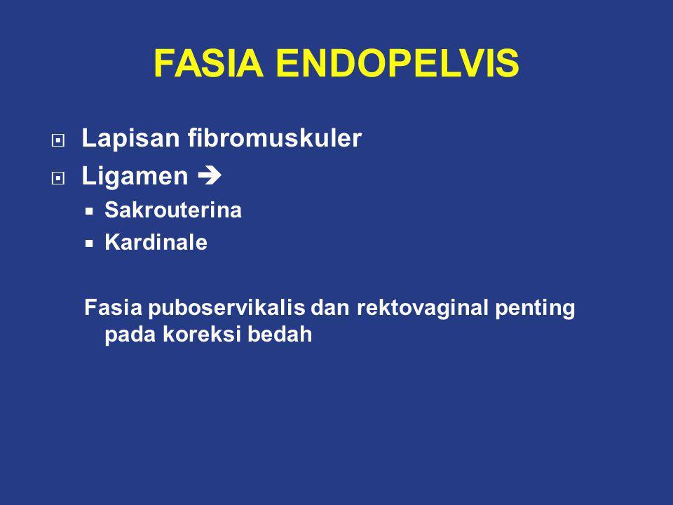 FASIA ENDOPELVIS Lapisan fibromuskuler Ligamen  Sakrouterina