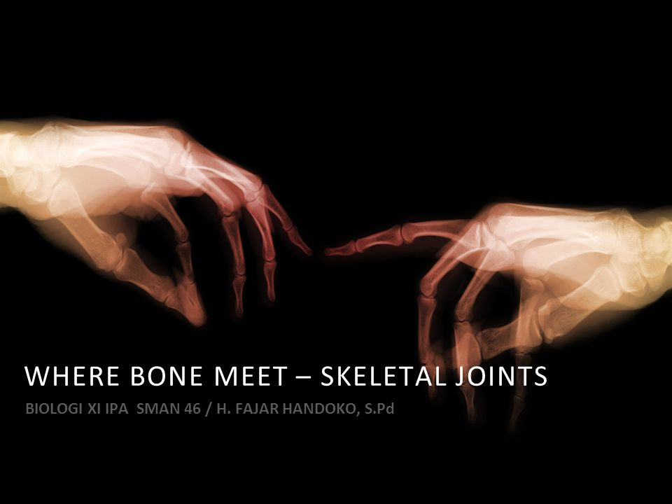 WHERE BONE MEET – SKELETAL JOINTS