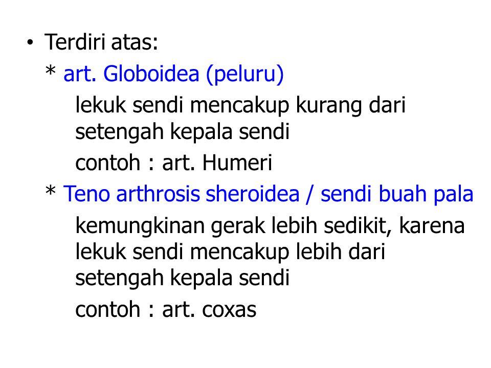 Terdiri atas: * art. Globoidea (peluru) lekuk sendi mencakup kurang dari setengah kepala sendi. contoh : art. Humeri.