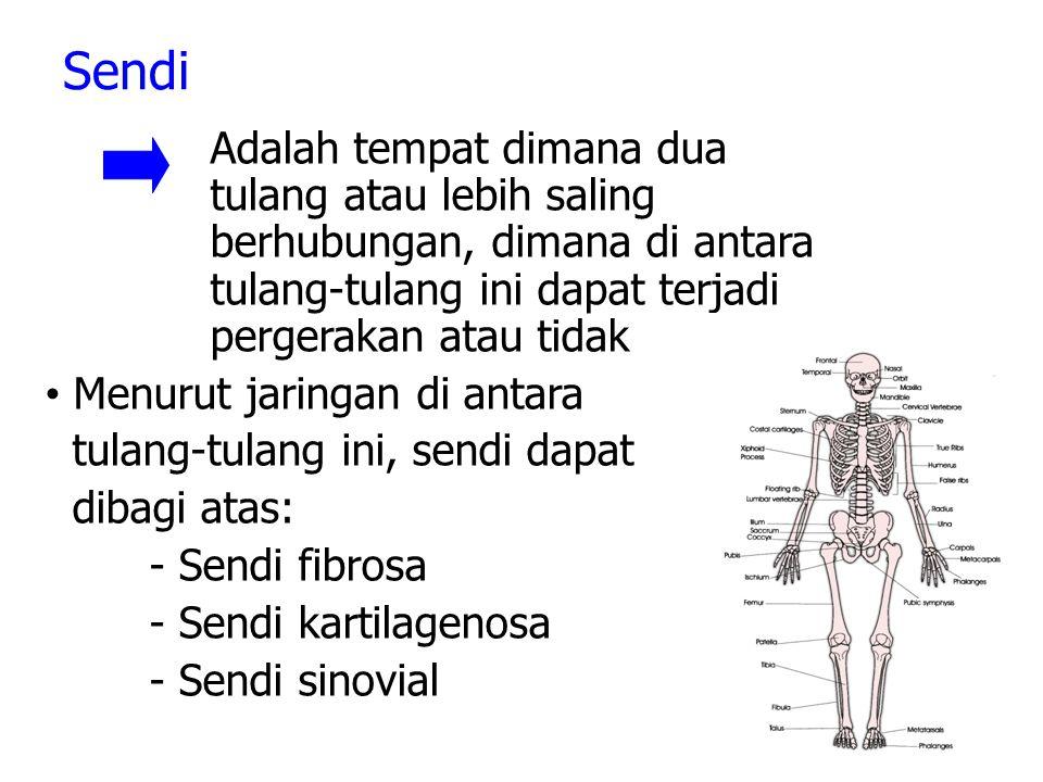 Sendi Menurut jaringan di antara tulang-tulang ini, sendi dapat