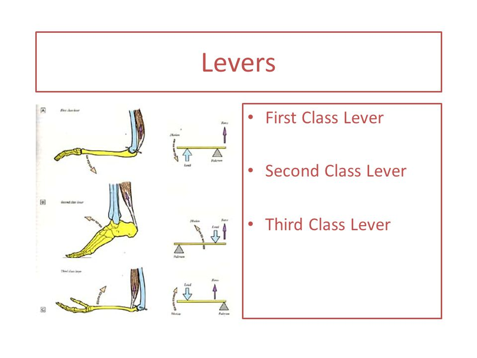 Levers First Class Lever Second Class Lever Third Class Lever