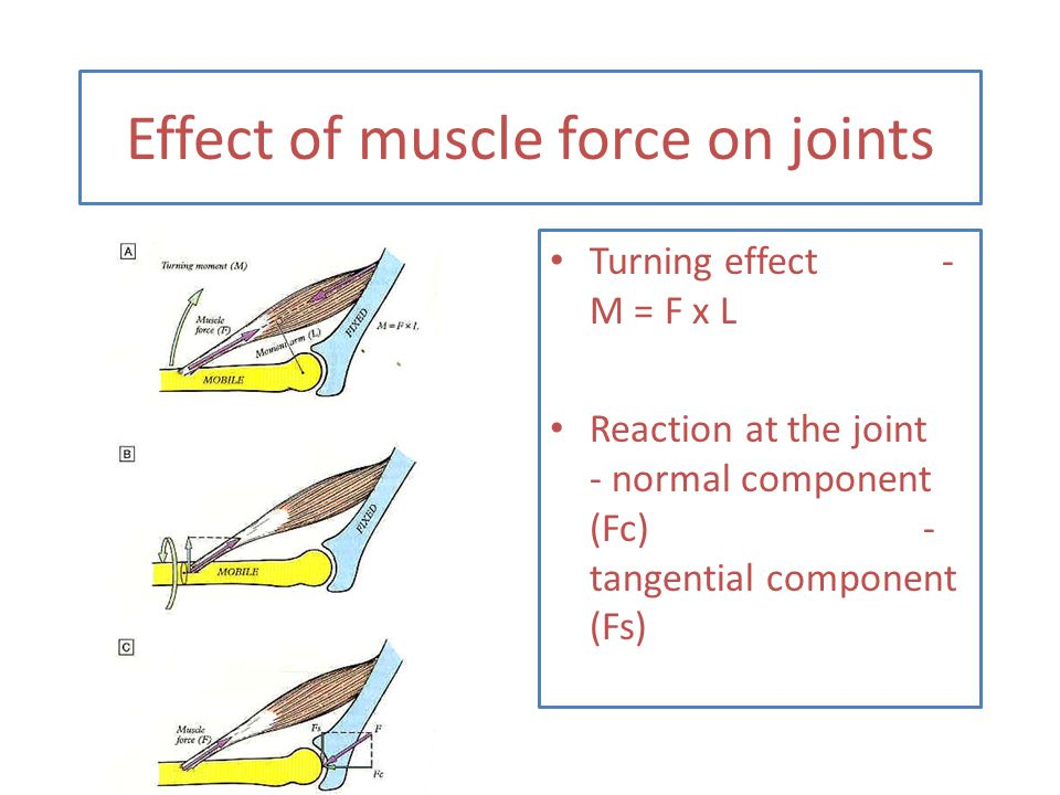 Effect of muscle force on joints