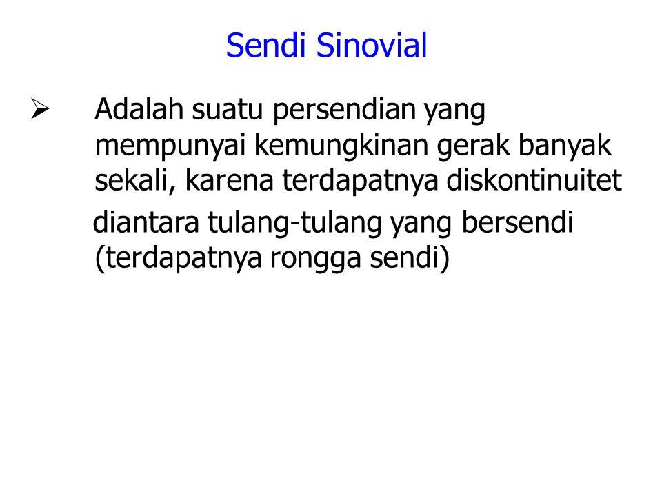 Sendi Sinovial Adalah suatu persendian yang mempunyai kemungkinan gerak banyak sekali, karena terdapatnya diskontinuitet.