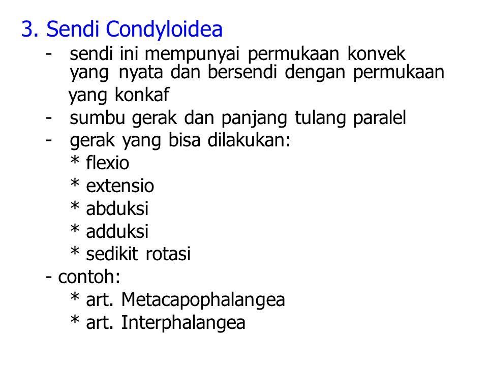 3. Sendi Condyloidea - sendi ini mempunyai permukaan konvek yang nyata dan bersendi dengan permukaan.