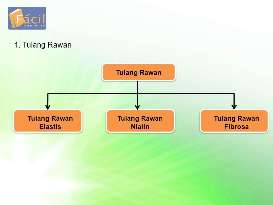 1. Tulang Rawan Tulang Rawan Tulang Rawan Elastis Tulang Rawan Nialin