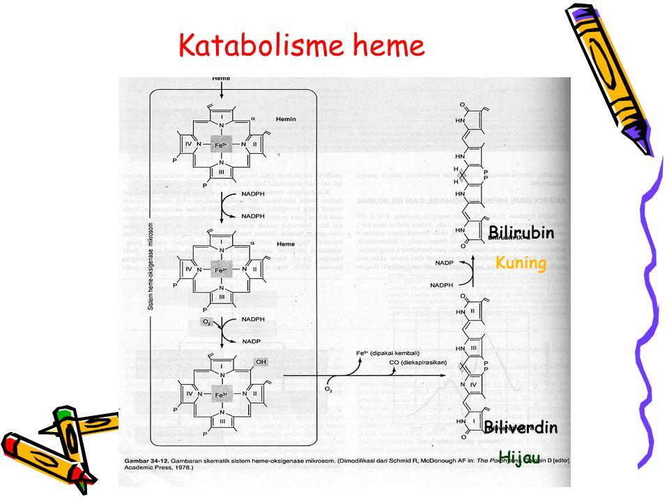 Katabolisme heme Bilirubin Kuning Biliverdin Hijau