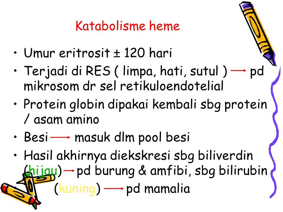 Katabolisme heme Umur eritrosit ± 120 hari. Terjadi di RES ( limpa, hati, sutul ) pd mikrosom dr sel retikuloendotelial.