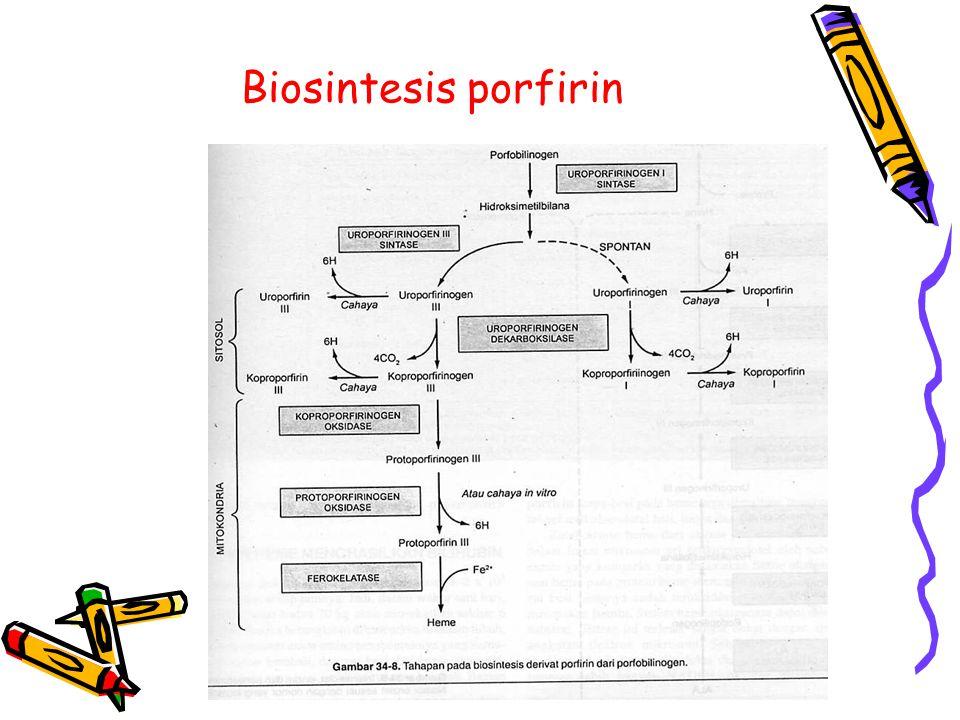 Biosintesis porfirin