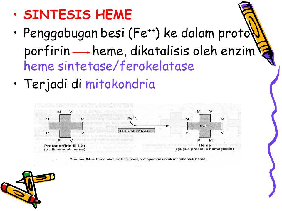 SINTESIS HEME Penggabugan besi (Fe++) ke dalam proto- porfirin heme, dikatalisis oleh enzim heme sintetase/ferokelatase.