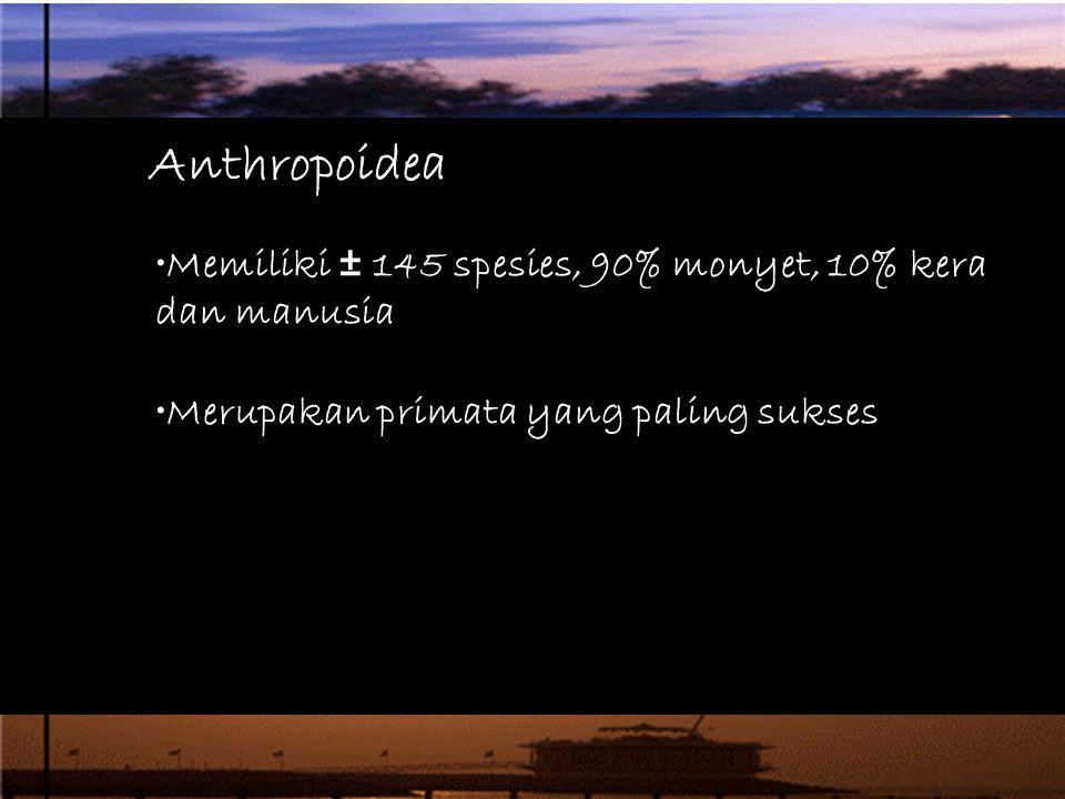 Anthropoidea Memiliki ± 145 spesies, 90% monyet, 10% kera dan manusia