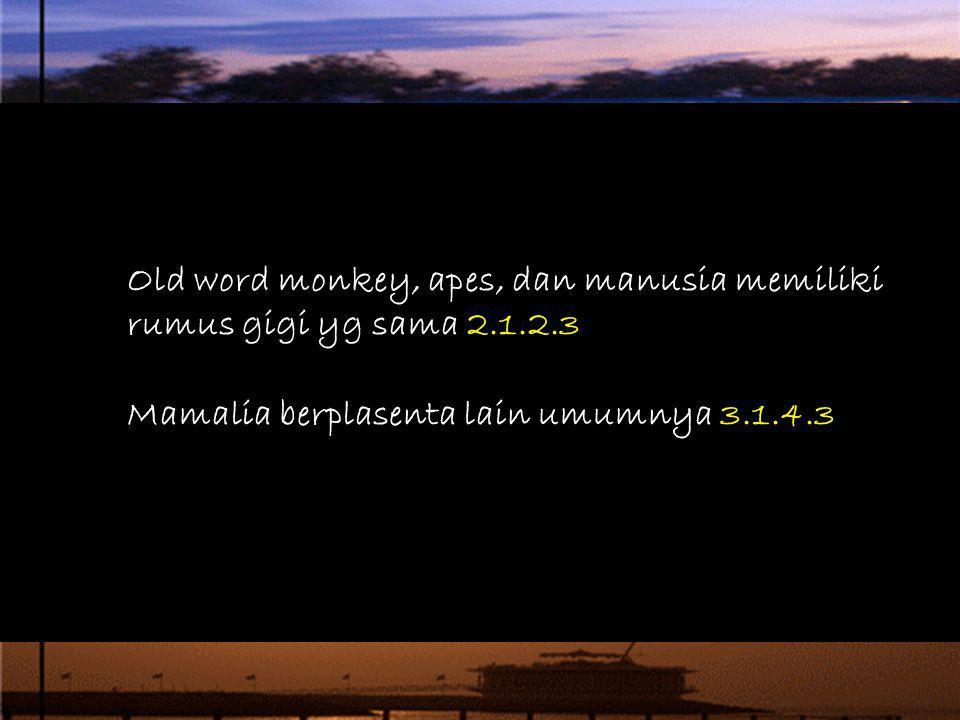 Old word monkey, apes, dan manusia memiliki rumus gigi yg sama 2.1.2.3