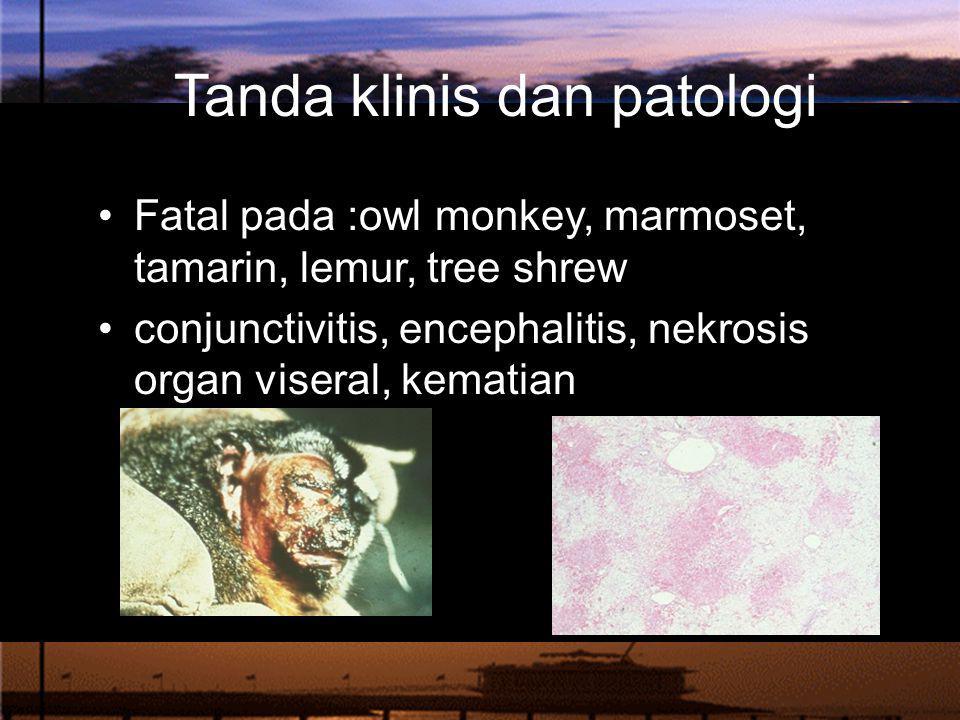 Tanda klinis dan patologi