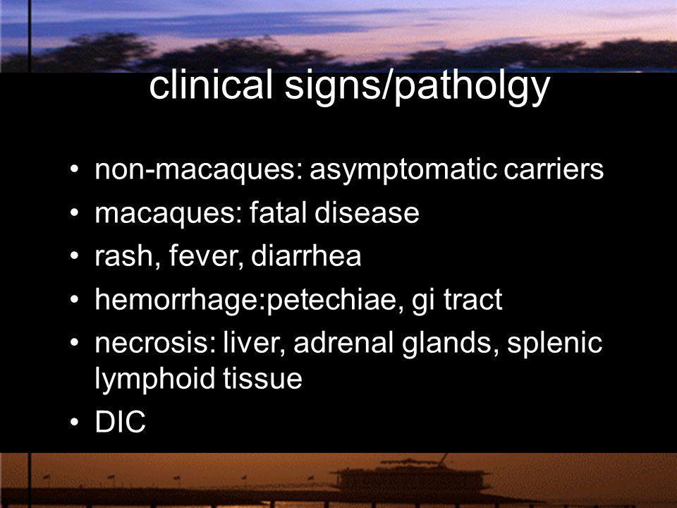 clinical signs/patholgy
