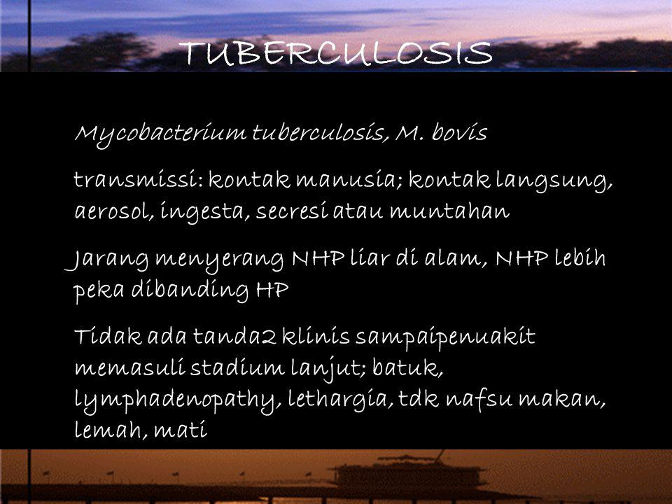 TUBERCULOSIS Mycobacterium tuberculosis, M. bovis