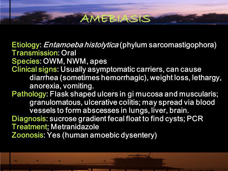 AMEBIASIS Etiology: Entamoeba histolytica (phylum sarcomastigophora)