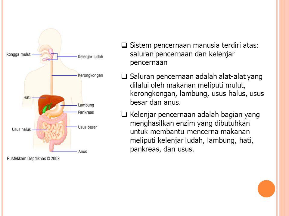 Sistem pencernaan manusia terdiri atas: saluran pencernaan dan kelenjar pencernaan